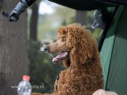 Familiehondendag-57.jpg