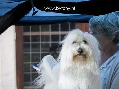 Familiehondendag-54.jpg