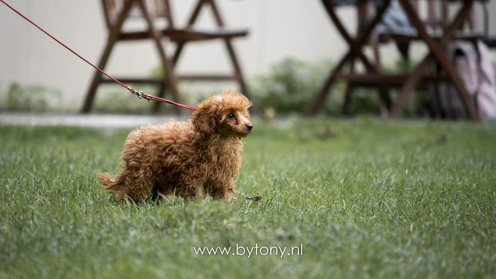 Familiehondendag-55.jpg