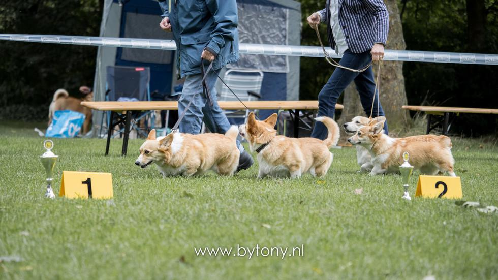 Familiehondendag-70.jpg