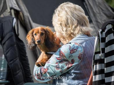 Familiehondendag-72.jpg