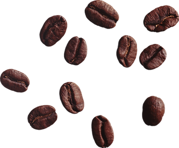 beans 4.png