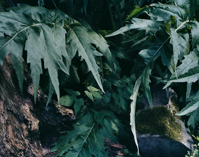 PERSONAL_2015_Nature_studio_retouched.ti