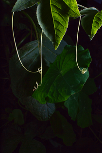 PERSONAL_2016_leaves,tendrils_studio_ret