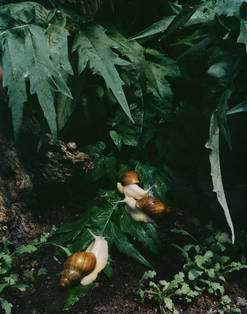PERSONAL_2015_snails,landscape_studio_re