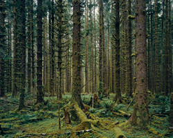 Rain Forest, Olympic National Park, Wash