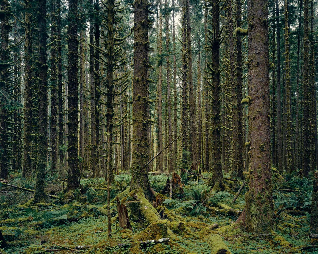 17728.6.17 Hoh Rain Forest, Olympic Nati