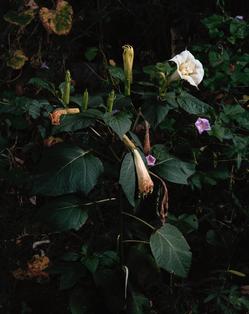 PERSONAL_2016_floweringplant_studio_reto