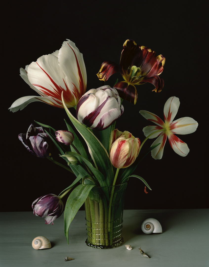 SharonCore_1610_Tulips.tif