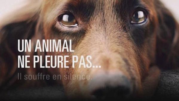 maltraitance-animaux.jpg