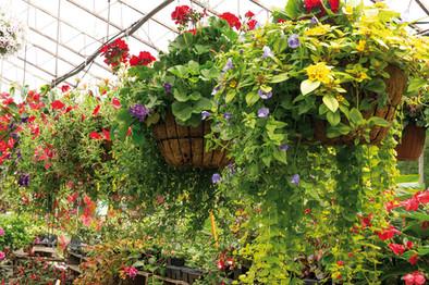 jardiniere-serre-2.jpg