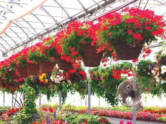 Jardiniere-serre.jpg