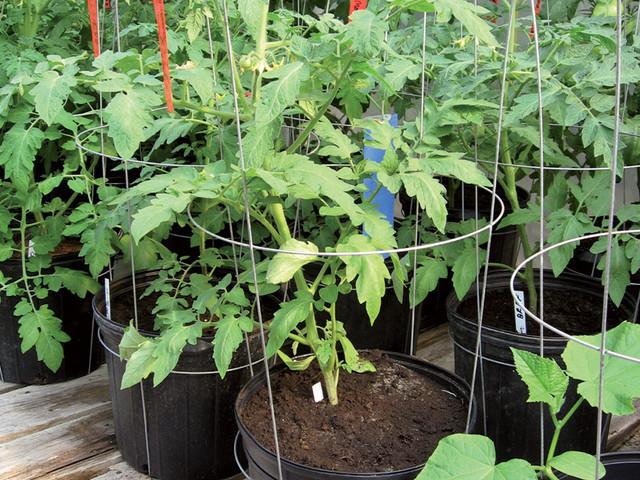Support-conique-plant.jpg