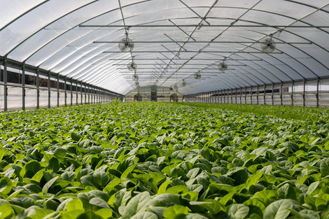 1200-agriculture.jpg
