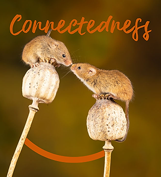 Connectedness.png