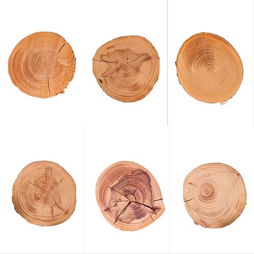 6 Wood Cut Graphics