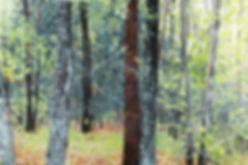 wet woods near glad run.jpg