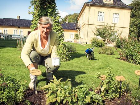 Ogród ziołowy w Parku Gulskogen w Drammen/ Urtehagen i Gulskogen Gård i Drammen