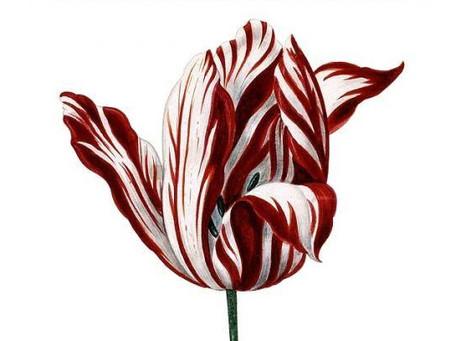 Wiosna, tulipany i szaleństwo tłumu