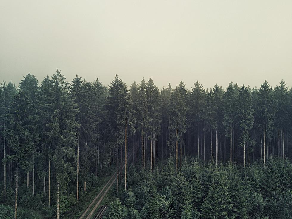 Schwarzwald Drohne