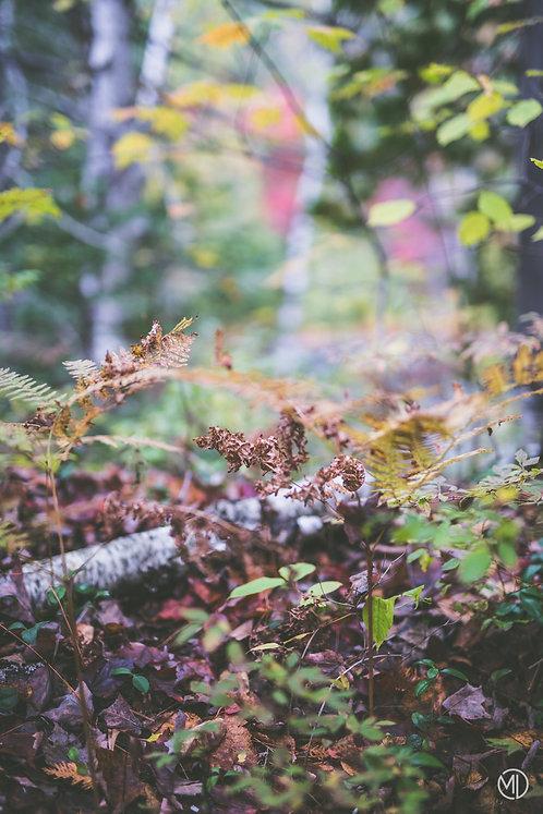 5 photos - automne au Québec (vertical)