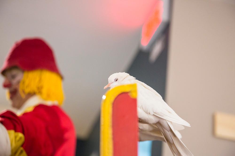 Photo clown colombe anniversaire enfant Montréal Marie Deschene