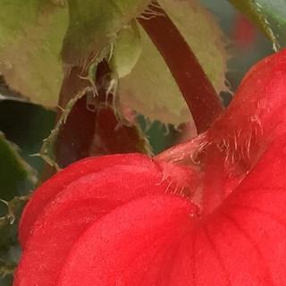 Brush Strokes of a Flower