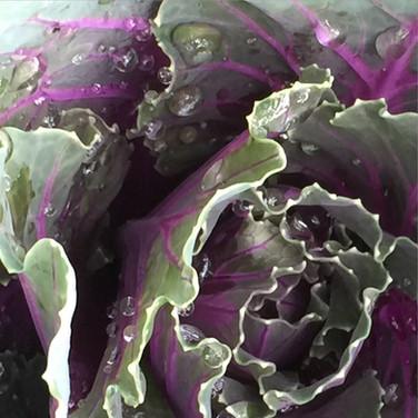 Cabbage in the Rain