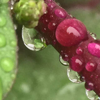 Water Drops Holding On
