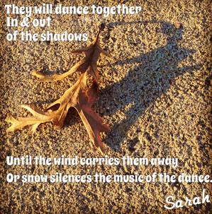 Shadow Dance of a Leaf