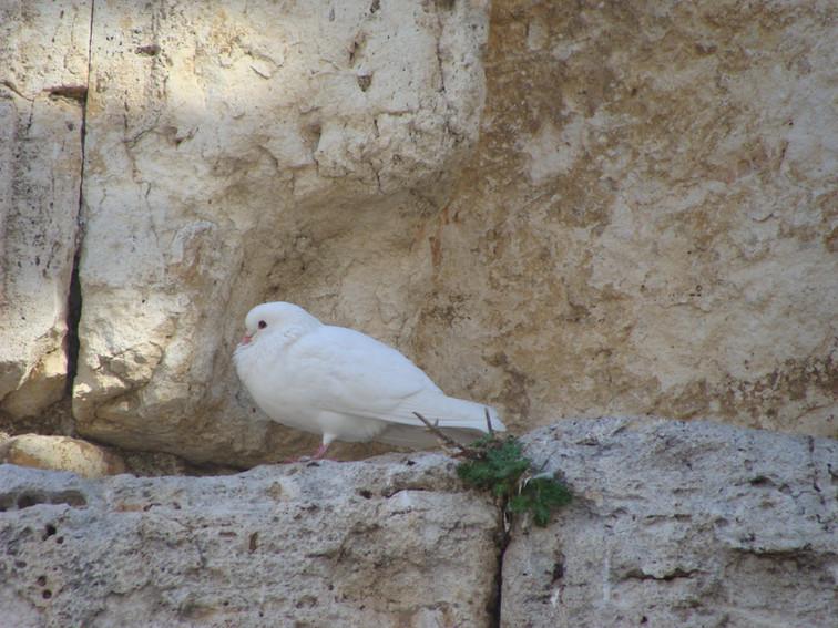 Dove of Peace, Jerusalem
