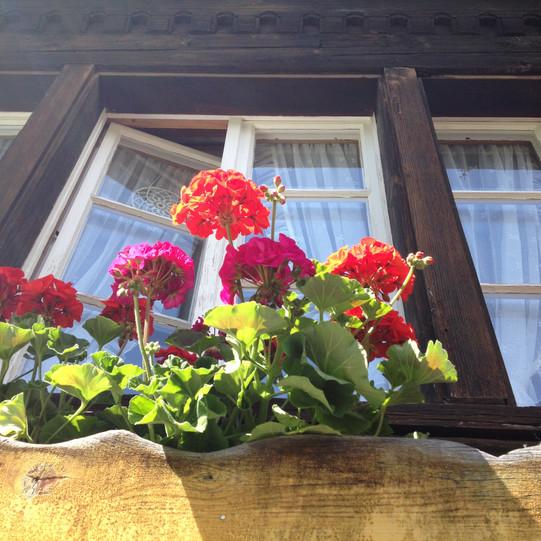 Flowerbox in the Window Outside Bern