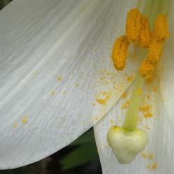 Heart in Full Bloom