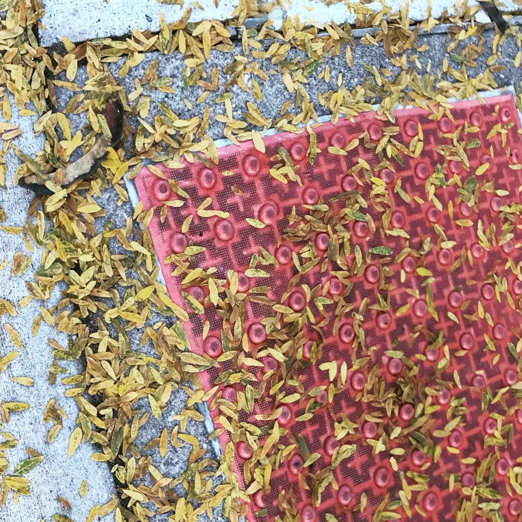 Carpet of Fallen Leaves