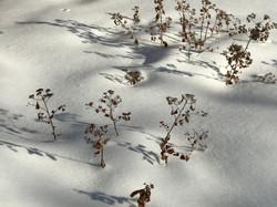 Quiet of Winter Snow