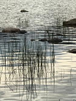 Grass & Stones in Water