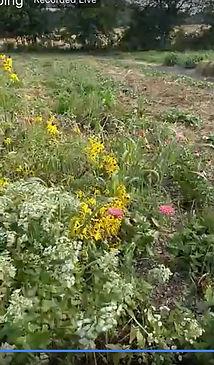 peacemeal pollinator patch tour.jpg