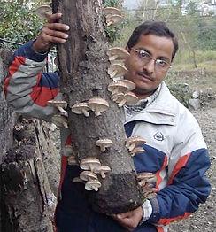 Shiitake Mushrooms at Home Virginia work
