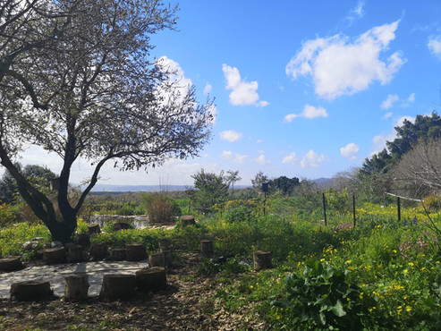 יער המאכל בית לחם הגלילית