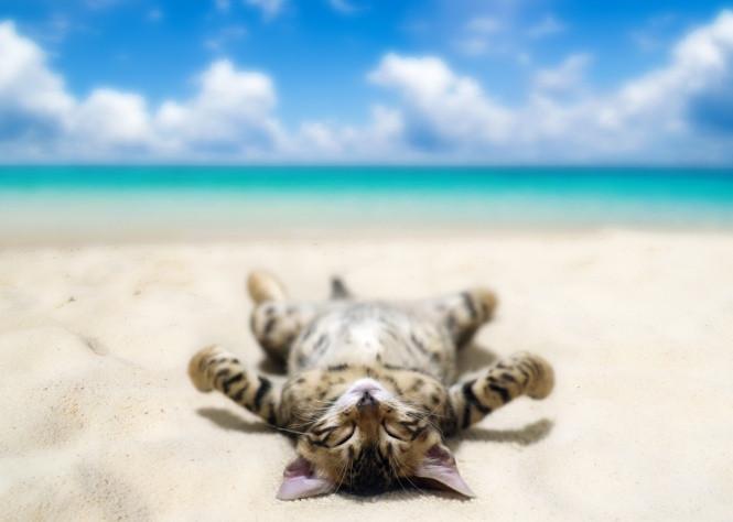 Relâcher comme un chat
