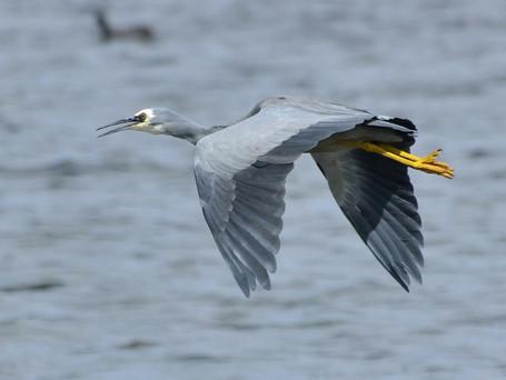 Birding could Boom in Rural Victoria too