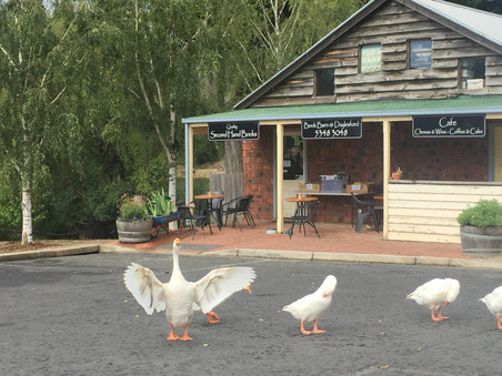 Does duck shooting go with tourism?