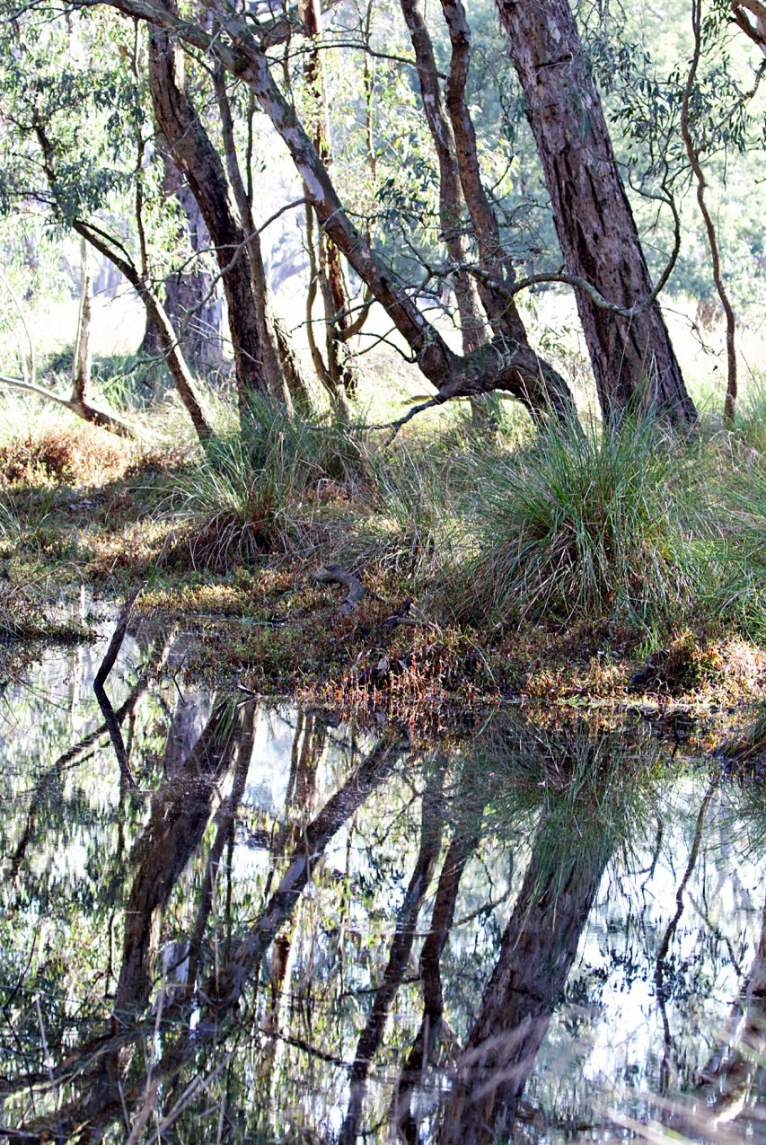 Yea Wetlands (1)