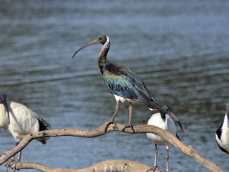 NSW to reap more rewards of nature tourism.