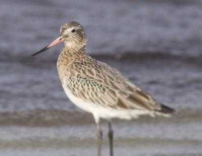 World Migratory Bird Day, May 10