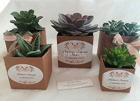Bomboniere matrimonio green piante grasse - Bonsai - Aromatiche