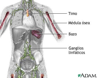 Beneficios del ayuno para el sistema inmunológico