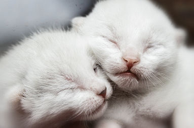 Kittens_383x254.jpg