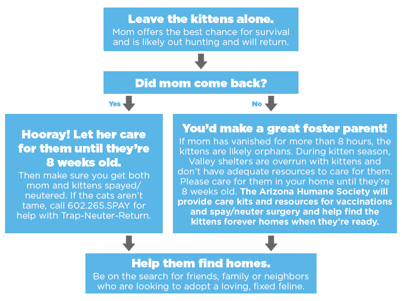 New Kitten Flow Chart 2.png