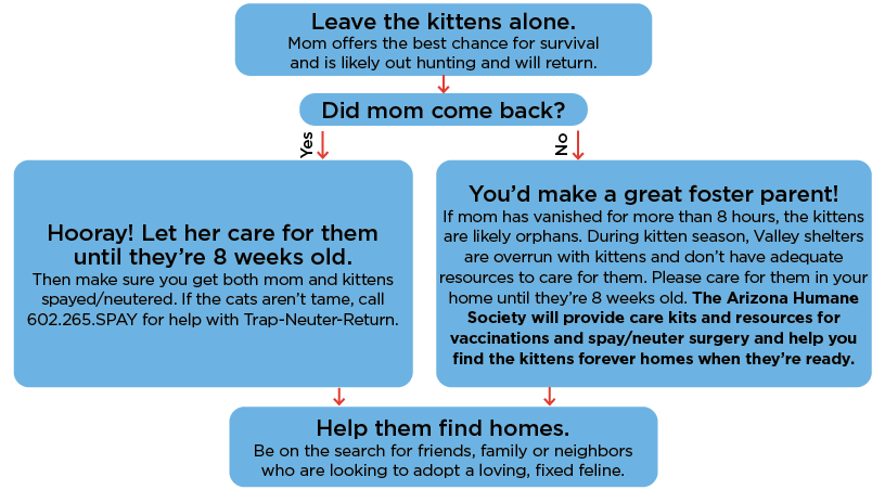 found-kittens-infographic 2020 - NEW.png
